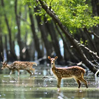 Wildlife Tours Bengal