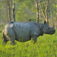 Wildlife Tours Bengal