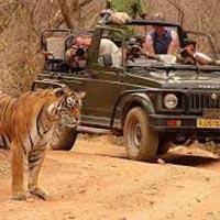 Rajasthan Wildlife Tour Package
