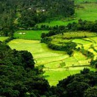 Bangalore - Coorg Package