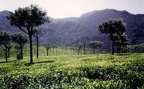 5 Nights and 6 Days Package –  Mysore, Ooty and Kodaikanal