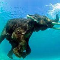 Captivating Andaman Tour