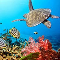 Andaman Exotica Honeymoon Tour Package