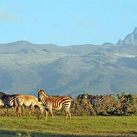 Summer Untamed Tanzania with Kenya Package