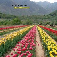 Srinagar - Gulmarg - Pahalgam Tour Package