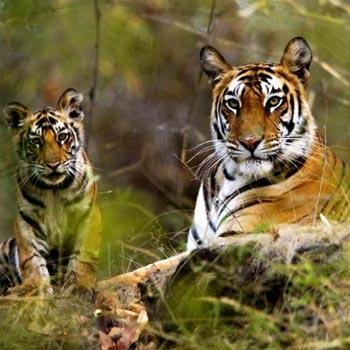 15 Days Wildlife Tour of India