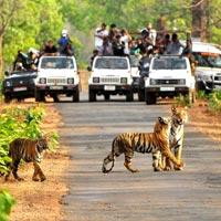 Odisha Nature Tour