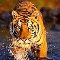 Sundarban Tour Package
