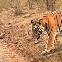 Adventurous Sariska Tour Package