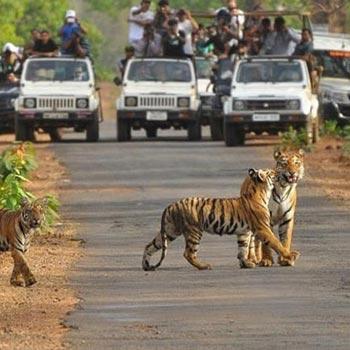 Adventurous Rajasthan Tour Package5 Days & 4 Nights