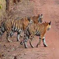 Rajasthan Tour Package For Adventure Lovers