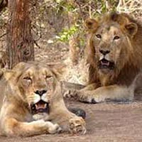 Madhya Pradesh Temple & Tiger Tour