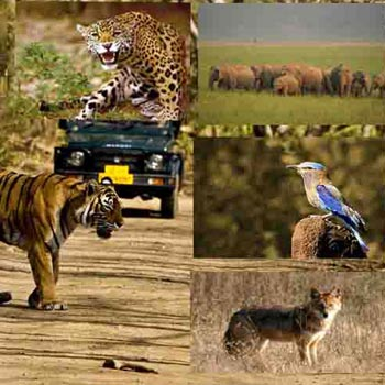 Trip to Bandhavgarh Tour