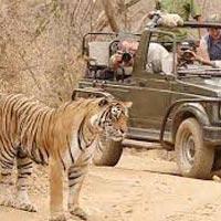 Ranthambore - Jaipur Tour