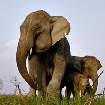 Wildlife Circuit Of Assam Tour