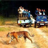 Nainital-Corbett National Park (4Days / 3 Nights)