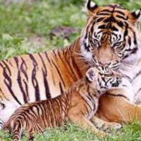 Mussoorie-Nainital-Corbett National Park 9 Days / 8 Nights Tour
