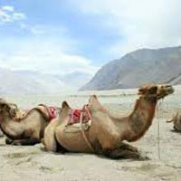 Across Kashmir to Ladakh Tour
