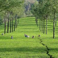 Kerala Honeymoon 3N/4D Tour