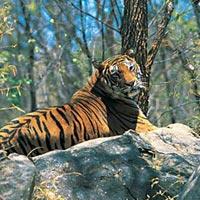 Munnar - Thekkady - Alappuzha Tour