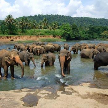 Short Break At Sri Lanka Tour
