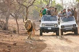 Safari Tour Package