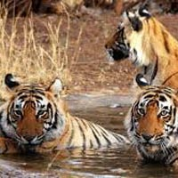 Short Escape to Kanha Tour