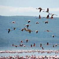 4 Days Masai Mara/Nakuru Camping Safari