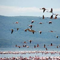 Day Trip Nakuru National Park