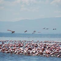 2 Days / 1 Night Lake Nakuru National Park Tour