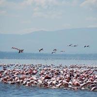 2 Days / 1 Night Lake Nakuru National Park Tour