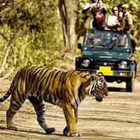 SARISKA WILDLIFE AT RAJASTHAN