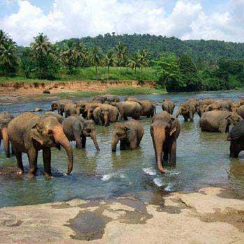 Wonder Srilanka Tour