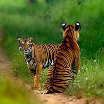 Kabini, Bandipore,Madhumalai National Park ,With Ooty Package