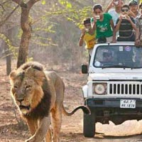 Wildlife Safari Package in Gujarat
