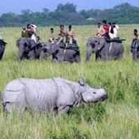 Assam Wild Tour