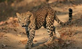 North East Wildlife Tour Package  – Provasin Holidays