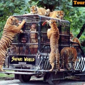North East Wildlife Tour