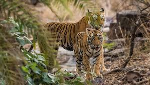 Satkosia and Chhutkei Jungle Tour
