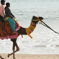 A Cheering Trip To Puri Package