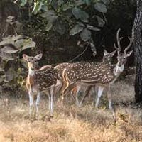 Wildlife and Heritage of Gujarat