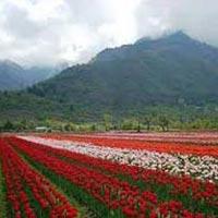 Srinagar - Gulmarg 5 Days