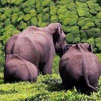 Dooars - Jayanti Jaldapara & Gorumara Package
