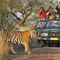 Taj with Tiger Tour