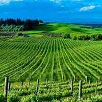 New Zealand North Island Tour