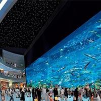 Dubai City Trip Package