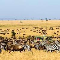 Untamed Tanzania with Kenya Tour