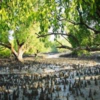 Royal Sundarban Tour