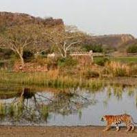 Fort & Forest (Jaipur 2N - Ranthambore 2N) Tour