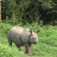 Kathmandu Chitwan Holiday Package